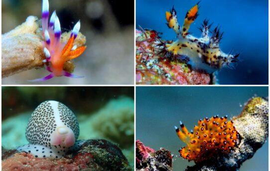 Makhluk Unyu di Bawah Laut Padang Bai