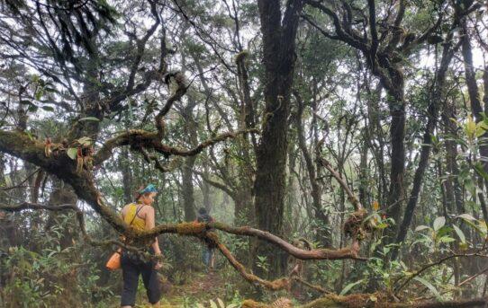 Bukit Sebayan - Hutan Keramat Dayak Tomun