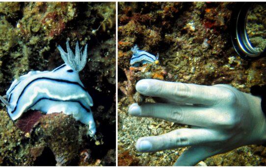Diracun Foto Macro Bawah Laut @ Selat Lembeh